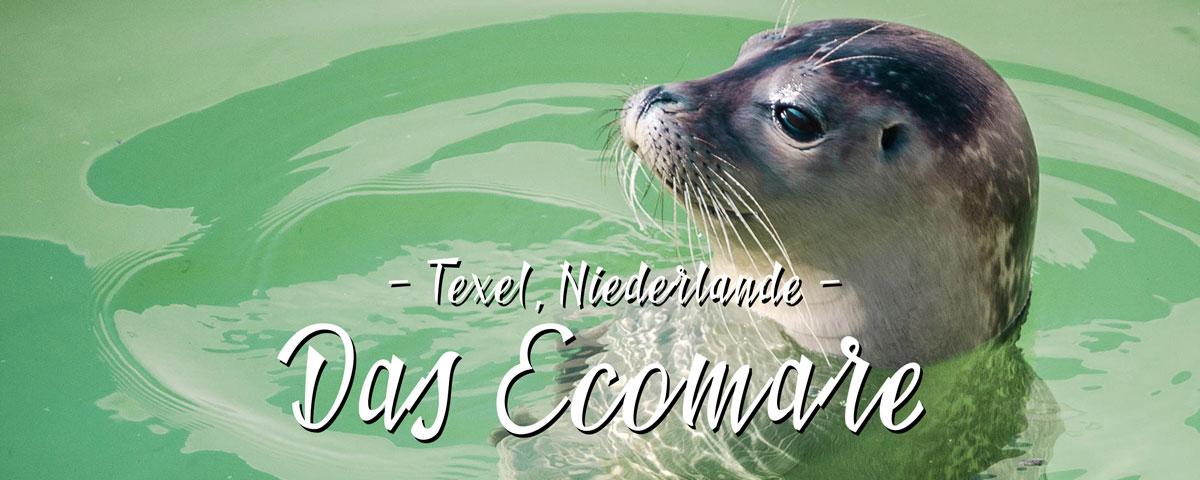 Das Ecomare – Umweltschutz trifft Seehundbabies